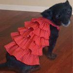 Make your own doggie clothes !!!