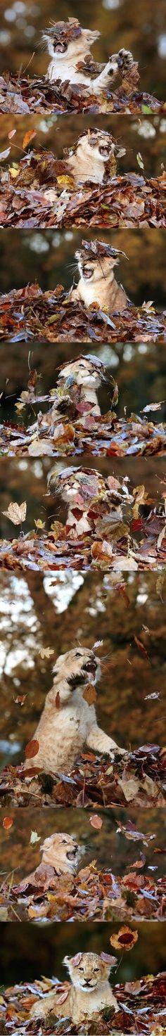 낙엽들과 싸우는 샴바