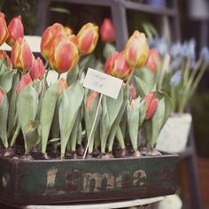 The possibilities are endless with spring bulbs- grab ours from Lowe's or Wal-mart and get creative!