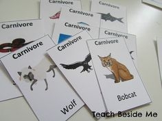 Food Chain Game... goes along with book C Magic School Bus Science Exploration