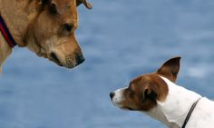 It's Not Dog Eat Dog: An Argument for Collaboration