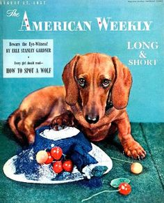 The Long and Short of it All: A Dachshund Dog News Magazine: The American Weekly
