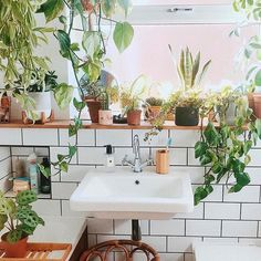 A Guide To The Best Plants For Your Bathroom | A Pair & A Spare