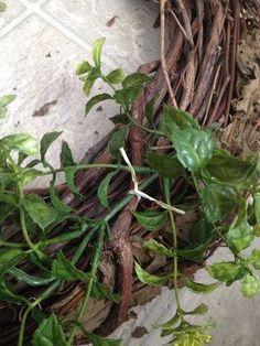 Easy Garland Wreath - The 15 Minute, 15 Dollar Wreath Boxwood Wreath Diy, Diy Wreath, Grapevine Wreath, Wreath Ideas, Green Garland, Green Wreath, Christmas Crafts For Gifts, Christmas Wreaths, Christmas Decorations