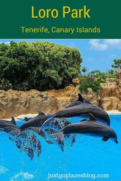 A dolphin show at Loro Park in Tenerife