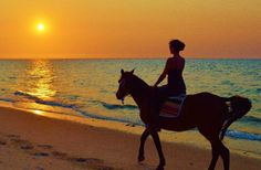 What did you get up to on the weekend? Head off into the sunset on a tropical island? Camel, Tropical, Journey, African, Horses, Island, Sunset, Crafts, Animals