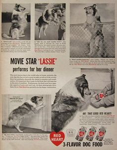 1948 Red Heart Dog Food Ad ~ Lassie