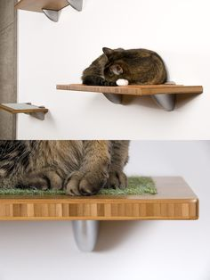 Buddha Wall Perch | 50 Perfect Presents For Pampered Pets
