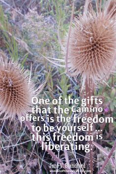 """""""One of the gifts that the #Camino offers is the freedom to be yourself ... this freedom is liberating."""" ~ Jane V. Blanchard http://womenoftheway2011.com"""