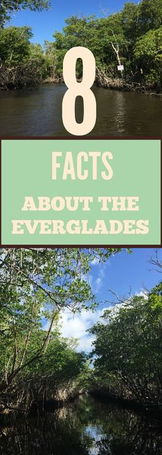 The Florida Everglades Airboat Experience can be one of the best adventures you ever have. See the real Florida Everglades on an airboat! Visit Florida, Florida Vacation, Florida Travel, Vacation Spots, South Florida, South Usa, Florida Usa, Florida Keys, Usa Travel Guide