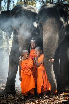 Little monks & elephants, Thailand Tibet, Shaolin Kung Fu, Thailand Elephants, Biggest Elephant, Forest Background, Make Smile, Buddhist Monk, Smiles And Laughs, Spirituality