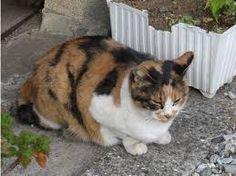 「猫 路地」の画像検索結果