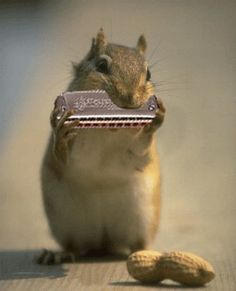 """I think he's playing the """"mouse organ"""" lol (yes, and he plays for peanuts!)"""