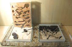 DIY Ant Farm Moat - PetDIYs.com