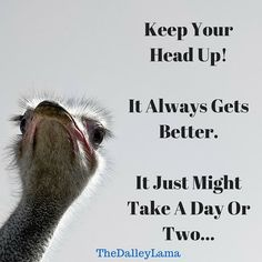 It always gets better. It just may take a day or two or... #inspiration #entrepreneur #motivation #betterdaysahead #life #TheDalleyLama