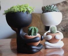 "2,198 Likes, 23 Comments - کاکتوس🌸ساکولنتcactus🌵succulent (@amin_hajimohamadi) on Instagram: ""📷 : @bitkiaskina 📷 : @casademenino #🌵 #cactus #succulent #succulents #cacti #cacto #kaktus #кактус…"""