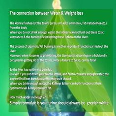 The connection between water and weight loss