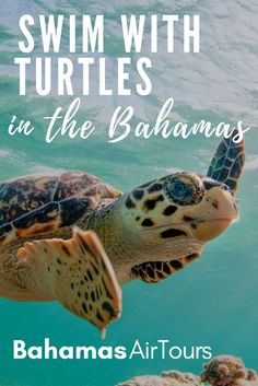 Things to do in Bahamas: Swim with Turtles. For the best Bahamas Vacation fly to Green Turtle Cay in the Abacos Islands and swim with Green Turtles in Coco Bay. Our unique tours are the World's first flying tours to the Bahamas. The perfect Bahamas Honeymoon ideas, fly to the Bahamas Pigs and Exuma Pigs on Pig Beach Bahamas. Our Tours include flights, boat excursions and hotels. Put a Bahamas Vacation on your Bucket List.  Top things to do in Bahamas include swim with turtles, pigs, sharks…