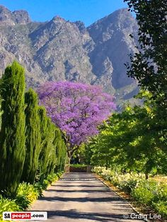 Franschhoek (South Africa) by Craig Lee 🇿🇦 South Africa Safari, Cape Town South Africa, South Afrika, Namibia, Le Cap, Out Of Africa, Africa Travel, Wine Country, Country Roads