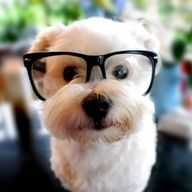 future dog! and yes the hipster glasses will be worn!