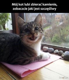 Funny animal memes of the day 25 pics cats веселые животные, Funny Animal Memes, Cute Funny Animals, Funny Animal Pictures, Cute Baby Animals, Cat Memes, Funny Cute, Cute Cats, Funny Memes, Funniest Animals