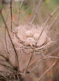 Bird... nest...eggs...