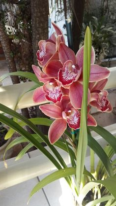 My orchids have bloomed