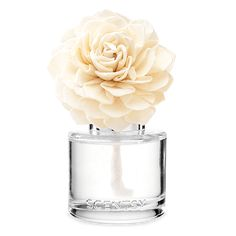 The Scentsy Aloe Water & Cucumber Fragrance Flower is handmade and beautifully presented with a glass display jar filled with Scentsy oil. Pink Sea Salt, Valencia Orange, New Fragrances, Scentsy Fragrances, Elegant, Displays, Plugs, Aloe, Womens Perfume