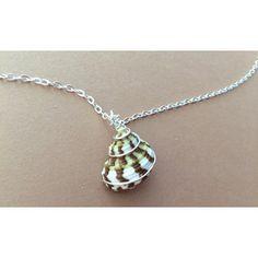 Shell Necklace, turban seashell, beach jewelry, wire wrapped turban shell, sea shell pendant necklace
