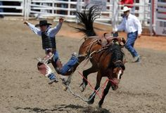 Clint Maier of Merrit, BC gets bucked off the horse Upbeat Jester in the novice saddle bronc event during the 101st Calgary Stampede rodeo in Calgary, Alberta, July 7, 2013. REUTERS-Todd Korol
