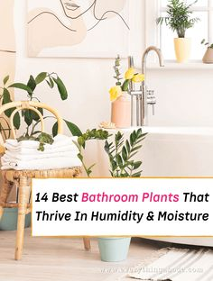A walk in the park is always a refreshing way to start your day, but did you know that there are plants that love the humidity of your bathroom? Houseplants are a great way to beautify your home and get better air quality, so you should have one in every room in your home —... Read More » The post Houseplants for the Bathroom: 14 Varieties That'll Love the Humidity appeared first on Everything Abode. Best Bathroom Plants, Bedroom Plants, Pothos Plant, Fern Plant, Palm Plant, Peace Lily, Fiddle Leaf Fig, Spider Plants, Orchid Plants