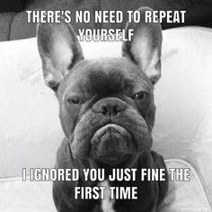 French Bulldog Quotes, Blue French Bulldog Puppies, Cute French Bulldog, French Bulldogs, Funny Animal Memes, Funny Animal Videos, Funny Dogs, Cute Dogs, Funny Animals