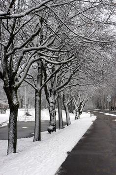 First Snow, Zelenogorsk, Russia Copyright: Alexandr Bravo