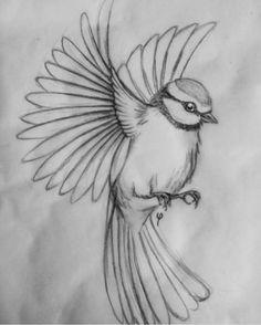 σχεδιο 40 Free & Easy Animal Sketch Drawing Information & Ideas Brighter Craft Art Sketches Animal art sketches Brighter Craft drawing easy Free ideas Information sketch σχεδιο Easy Pencil Drawings, Bird Drawings, Drawing Birds Easy, Bird Pencil Drawing, Animal Pencil Drawings, Flying Bird Drawing, Pencil Drawing Images, Tattoo Drawings, Pencil Drawing Tutorials