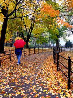 autumn-foliage-ny-central-park-1.jpg (375×500)