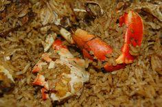 Yummy Bahamian crab n rice, delish