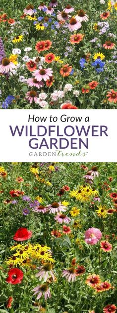 Wildflowers can provide a natural solution to both practical and ornamental landscape issues. That is, they are a good choice for sowing alongside roadways, spray paths, ditch banks, riparian ways, or hedge rows to prevent erosion while fostering a diverse plant community. They also offer a simple way to lend a touch of color to a large area. #gardentrends #wildflowers #flowergarden