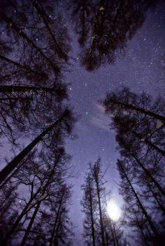 Trees, moon and starry purple sky . Beautiful Sky, Beautiful World, Beautiful Places, Galaxy Wallpaper, Wallpaper Backgrounds, Purple Sky, Sky Aesthetic, Stargazing, Night Skies