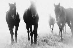 VICTORIA AGUIRRE   Photographer   Argentina & Australia - PAMPA HORSES