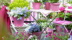 Caldo? Anche le piante soffrono. Ecco 5 rimedi per proteggere le tue piante. WWW.ECOMARKET.BIO