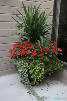 DIY easy summer planters and recommendations for instant growth