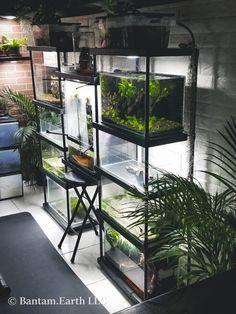 Diy Aquarium Stand, Aquarium Design, Aquarium Fish, Fish Tank Stand, Betta Fish, Fish Fish, Reptile Room, Animal Room, Paludarium