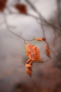"""before the last leaves fall... ~ """"Mood of November"""" by Pavel K on Flickr"""