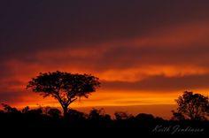 Stunning sunsets #sabisands #inyatisafari #safarivacation #wildlifephotography #AmazingAfrica