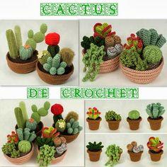 No need watering cactus http://febreroesasi.blogspot.com.es/2013/10/cactus-que-no-necesitan-riego.html