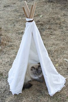 DIY Easy Cat Tent Tutorial from Transient Expression here. The only hard thing about this tutorial is finding a drill if you don't have one. For more Pet DIYs from dog beds to cat beds to designer pet...