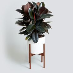 A little bit of greenery can transform a space—and breathe new life into a room. It's one of the easiest ways to update your house without having to spend a fortune on new furniture or overpriced décor accents. But not all houseplants are created the same