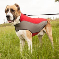 #Cape imperméable pour #chien en nylon avec bordure réfléchissante -> 34,70 € @fordogtrainersf Pensez à mentionner «J'aime» si ce produit vous plaît.