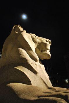 """Leon del monumento a los caídos  durante la Primera Guerra Mundial """"The Cenotaph"""" en el centro de la Plaza George Square. Escultor Ernest Gillick, Granito 1921-24 1.85 de altura y  2.55 de largo. Para esta foto procuré centrar la luna a lo alto sobre el eje de la cabeza del gran León. Glasgow Uk, Plaza, Sculpture, Granite, World War One, Falling Down, Centre, Pictures, Sculptures"""