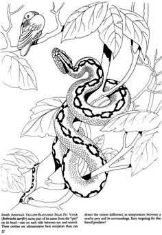 Serpent Snake Coloriage Coloring